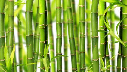 Ekstrakt z bambusa